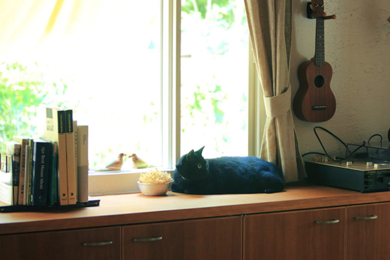特集 :猫と暮らすインテリア空間について