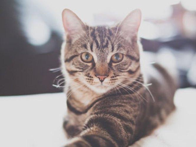 特集:猫がいる生活