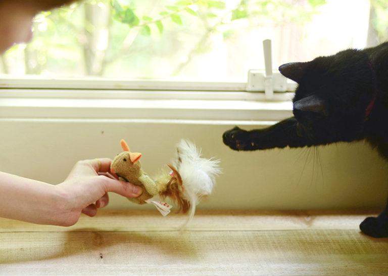 猫のおもちゃ特集