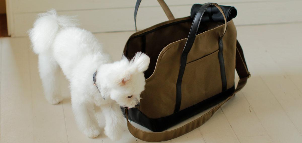キャリーバッグの先行予約販売を開始しました