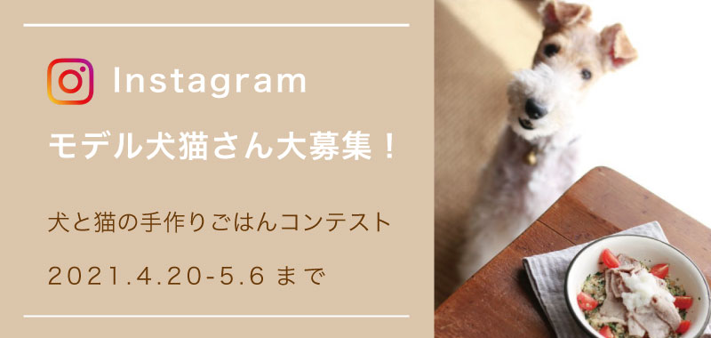 Instagramモデル犬猫さん大募集!【5月13日まで延長決定!】