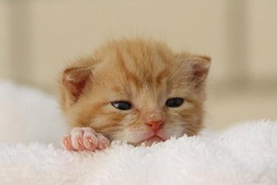 特集:子猫を迎える前に