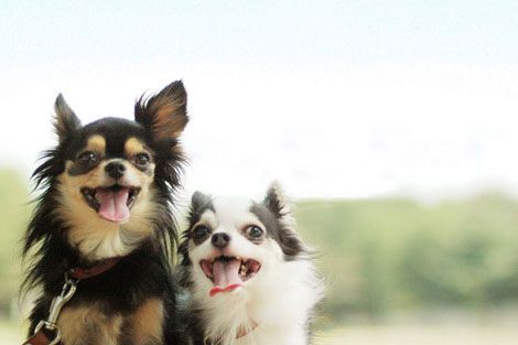 特集:犬のお散歩をもっと楽しもう!