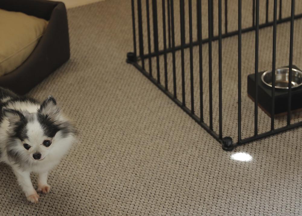 室内犬用ケージ   サークル    ノアズアークペットケージ