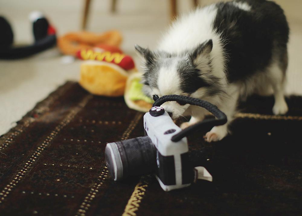 犬のおもちゃ カメラ