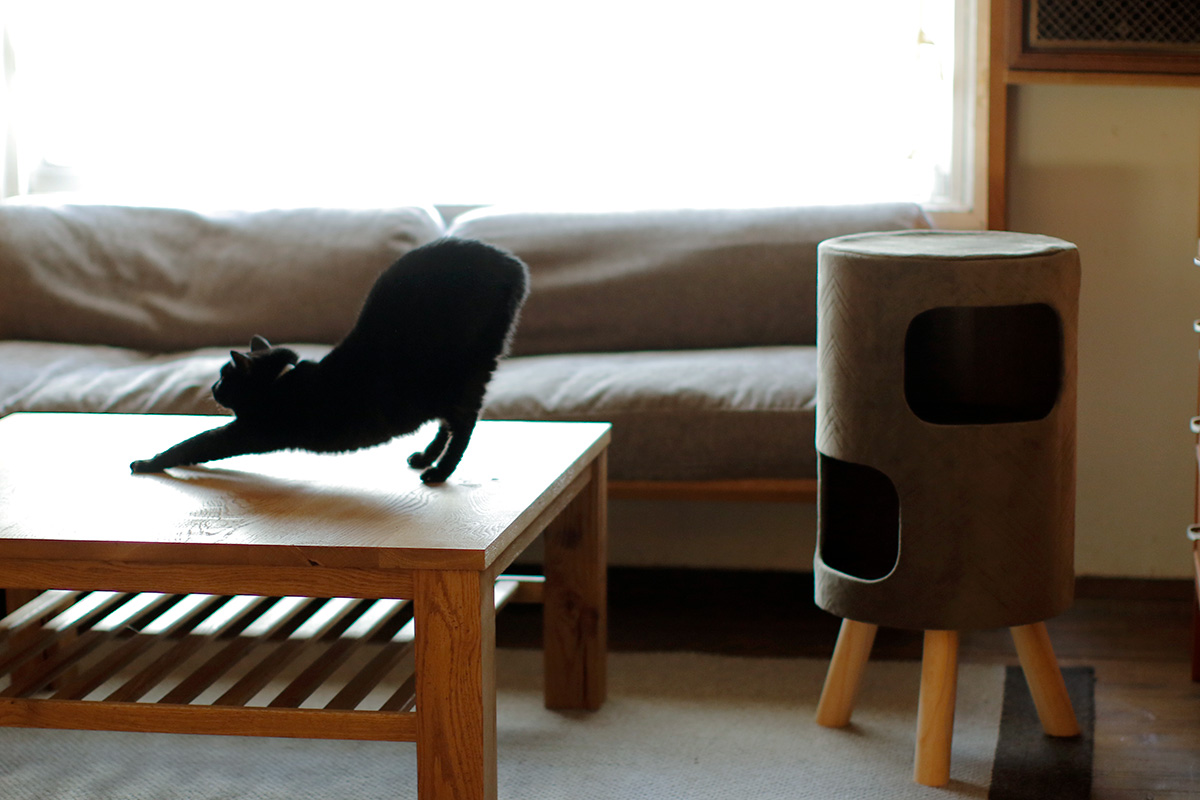 Satellite Cat Tower(Mink)